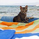 Skiathos Cat by Sturmlechner