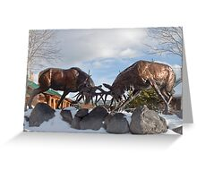 Rocky Mountain Elk, Greeting Card