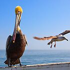 Pelican and Seagull Sharing the Pier by Don Claybrook