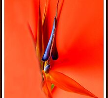 Orange Idyll by Olga