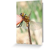 Brilliant Emerald, Somatochlora metallica on the photographer's finger. Greeting Card