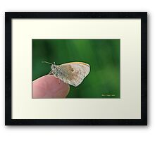 Small Heath, Coenonympha pamphilus, on the photographer's fingers B Framed Print