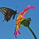 Butterfly in the Sky with Dahlia by Monnie Ryan