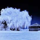 Fort Meigs, Infrared by Amber Williams