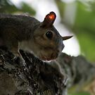 Have Any Fresh Nuts? by ericb