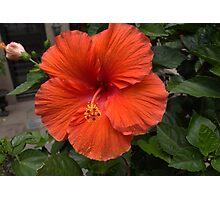 Back Bay Orange Flower Photographic Print