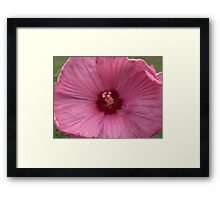 Garden Fuscia Flower Close Up Framed Print