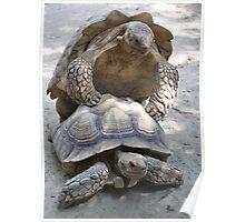 Turtle Loving Poster