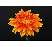 A Flower Portrait Photographic Print