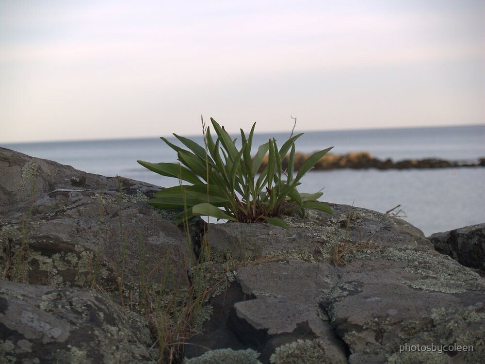 Maine Cliff Walk Rock Growth by photosbycoleen