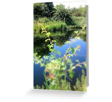 Summer-Blink Greeting Card