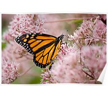 Monarch and Pink Flowers Poster
