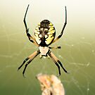 Banana Spider 2 by Sean McConnery