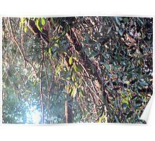 Shining Sun Poster