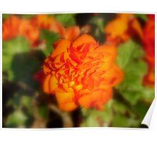 ORANGE FLOWER!  Poster