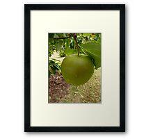 Apple Tree Apple Framed Print