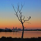 Stillness, Perth WA by Jeddaphoto