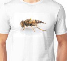Eristalinus taeniops hoverfly isolated oin white background Unisex T-Shirt