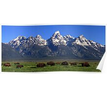 Bison Herd Panorama Poster