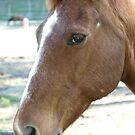 HORSE by Colin Van Der Heide