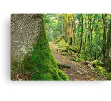 Forest trees covered with moss and dew Canvas Print