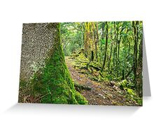 Forest trees covered with moss and dew Greeting Card