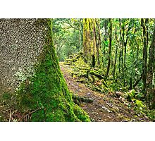 Forest trees covered with moss and dew Photographic Print