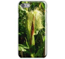 Corn Growing in the Field iPhone Case/Skin