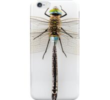 Dragonfly Anax parthenope isolated on white background iPhone Case/Skin