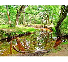 New Forest Stream Photographic Print