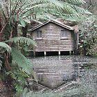 House on a pond by John Julian