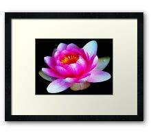 Delicate Beauty ©  Framed Print