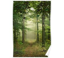 calm walk through the woods Poster