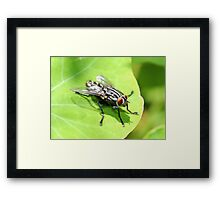 Flesh Fly Framed Print