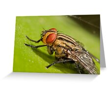 Lauxaniid Fly Greeting Card