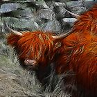 Highland Bulls by Trevor Kersley