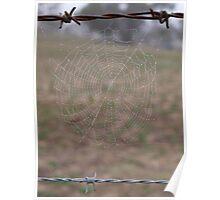 Dewy cobweb Poster