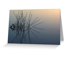 Water Spider Greeting Card