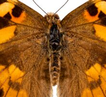 """Butterfly species Vanessa cardui """"Painted Lady"""" Sticker"""