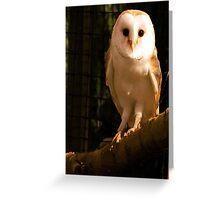 Barney Owl Greeting Card