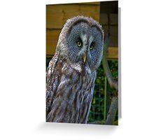 Owl #3 Greeting Card