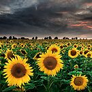 Sunflowers of the Storm by Michael Breitung