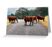 Outback Cows  Greeting Card