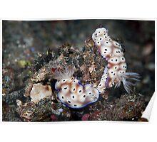 Nudibranch pair - Lembeh Straits Poster