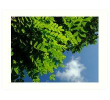 Summer morning sky Art Print