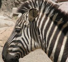 Zebra in the striped pajamas by Elise Armstrong