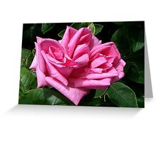 Pink Rose #1 Greeting Card