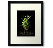 FENG SHUI BAMBOO Framed Print
