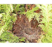 Birds nest Photographic Print