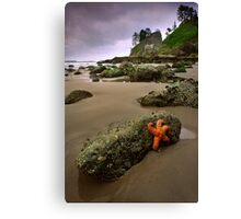 Starfish on the Rocks Canvas Print